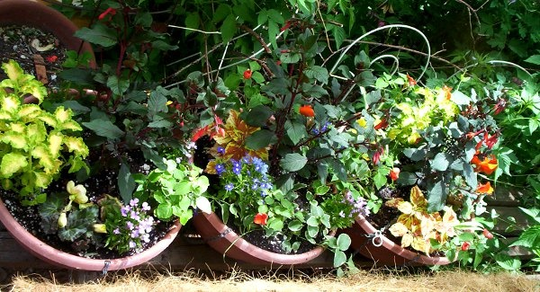 100_3364_0050-colorful-pots-600x325