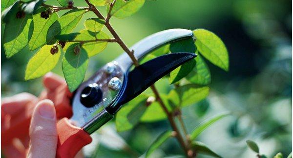 Pruning Your Garden