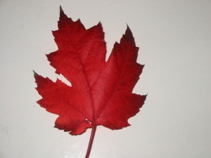 640px-Canadian_Maple_Leaf
