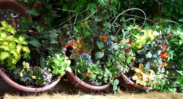 100_3364_0050-colorful-pots-600x325