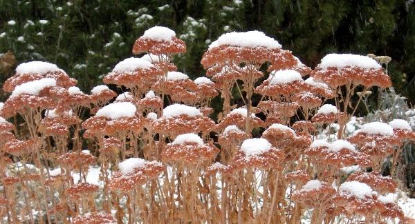 17dec2010-winterappeal-600x325