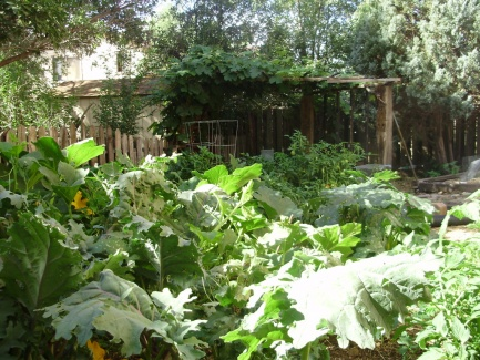 Garden-1024x768