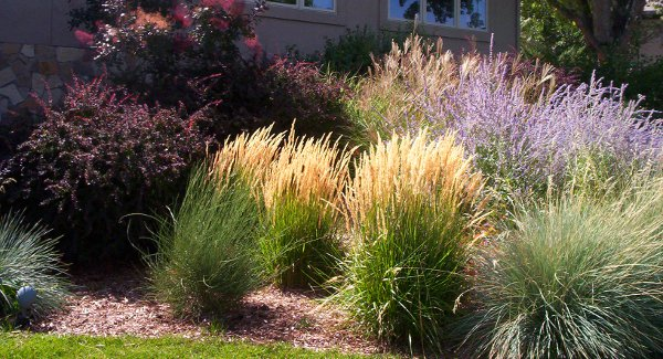 Drought Resistant Landscaping Amazing Best Ideas About